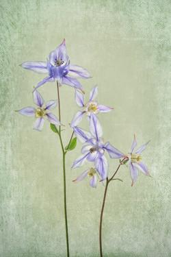 Columbine Botanicals
