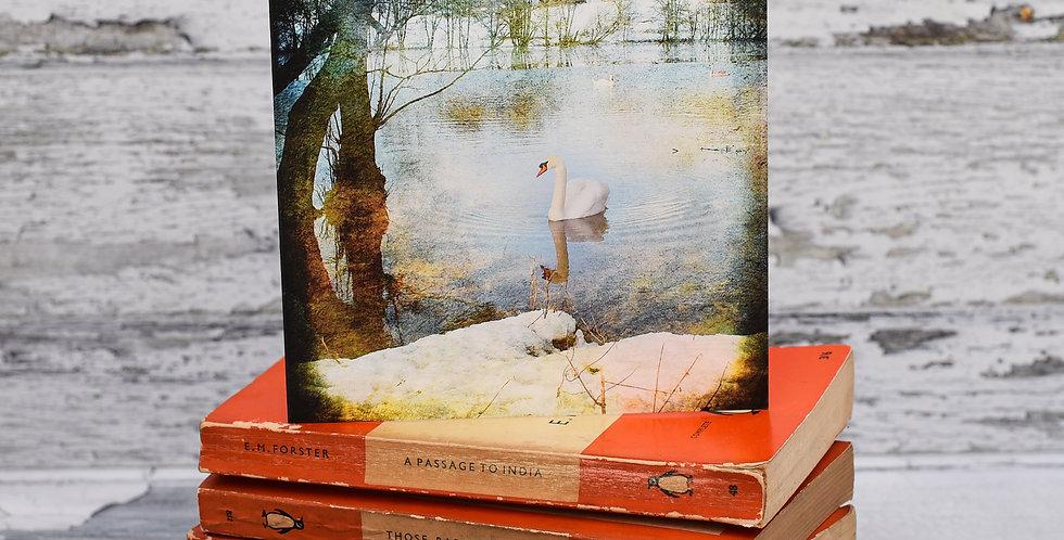 Swan on Hanmer Mere