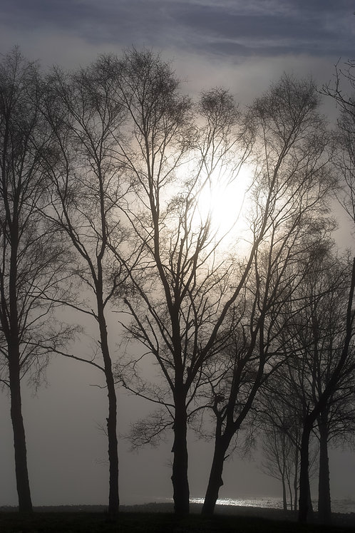 Mist Through Trees