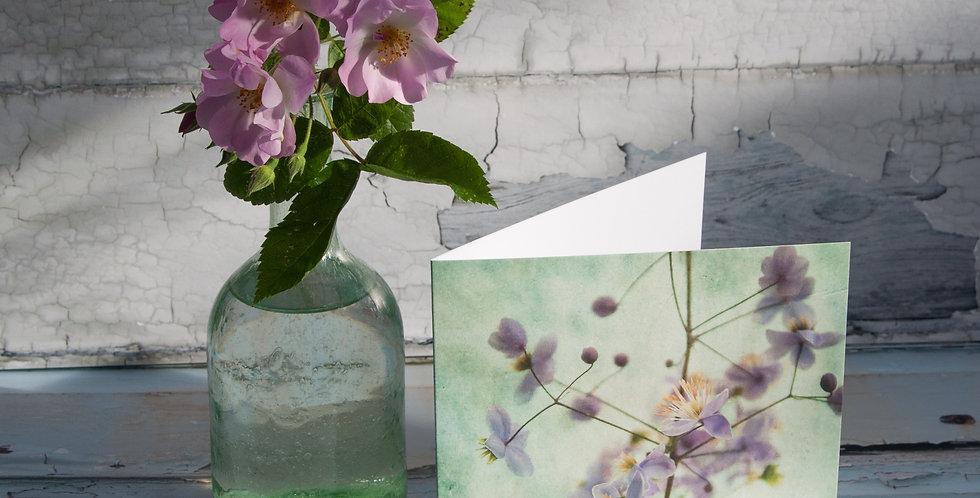Violet Meadow Rue