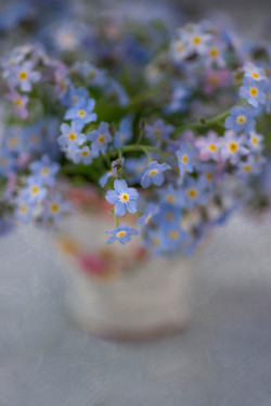 Cup of Forget Me Nots