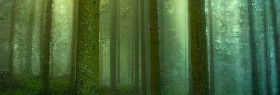 Cumbrian Forest