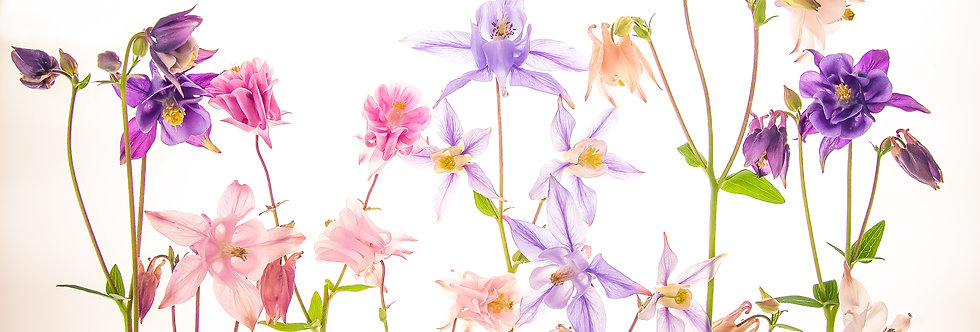 Columbines Together