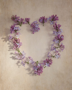 Pale Lilac Heart