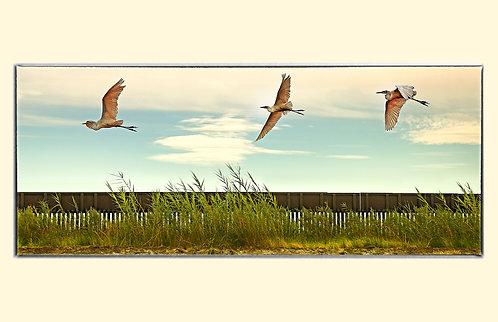 "11X17"" PRINT -""Cranes Over Border Wall"" - 2017 - Calexico, CA."