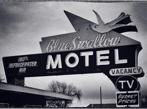 2 -Blue Swallow  New Mex.jpg