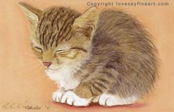 'CatNap'