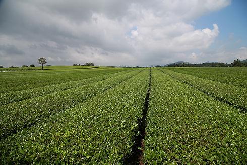 tea-4571536_1920.jpg