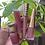 Thumbnail: Organic Tinted Lip Gloss