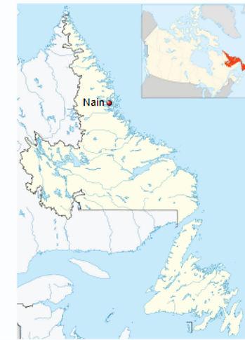 Naine Labrador.jpg