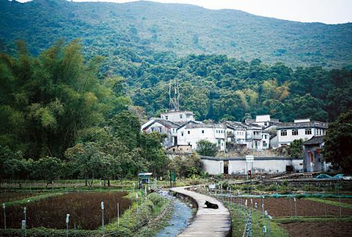 推動系統轉化—以香港大學永續鄉郊計劃為例