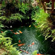 Redland Koi & Pond