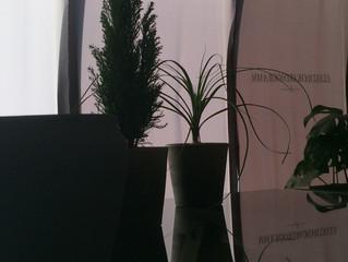 森永淳俊 NEW FOREST「新しい森」展 本日より開催致します。