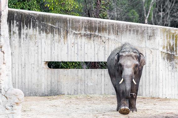 Elefantendhw.jpg