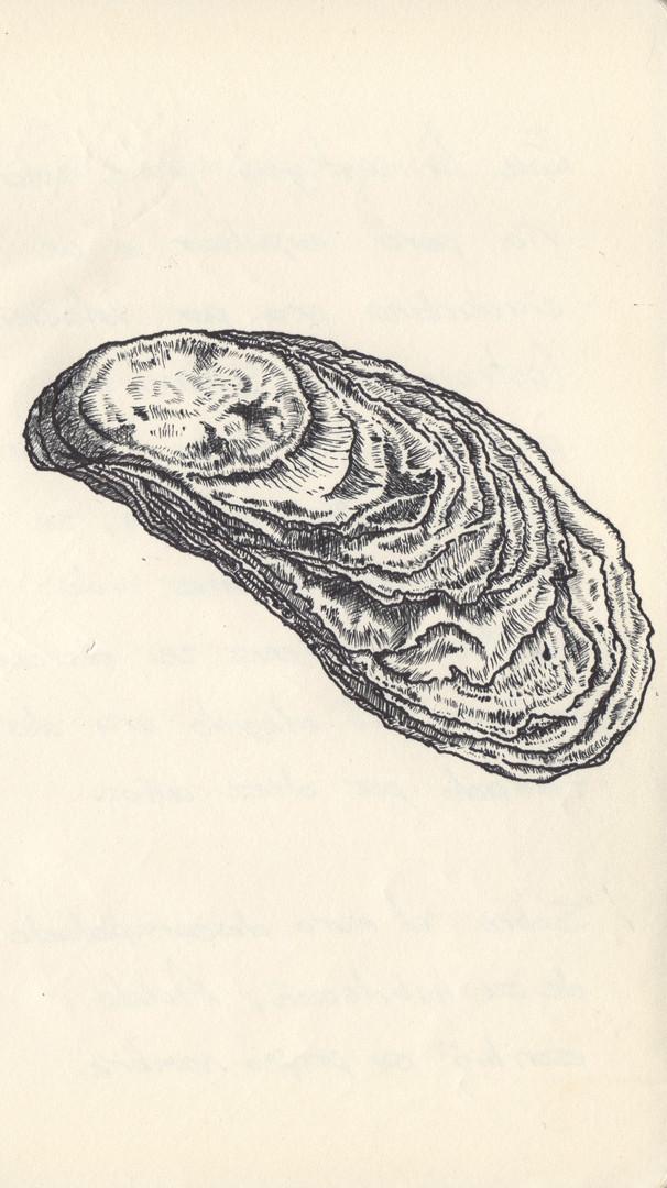 bitacora - ostion esgrafiado.jpg