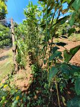 TESDA PTC-MP's Mini Organic Farm and Livestock