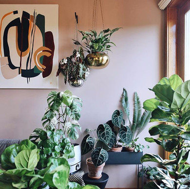 This_little_jungle_corner_can_make_even_