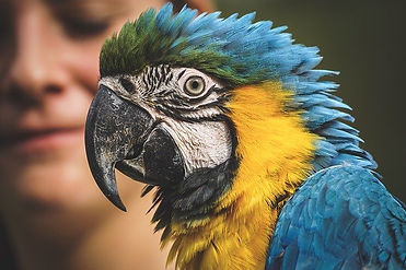 veterinario_animaliesotici.sassuolo.jpg