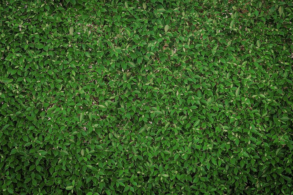 1313475-vista-de-cima-da-grama-verde-gra