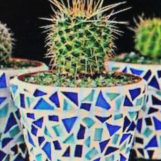 Rita's Pot Plant Mosaic