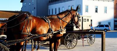 Horse-Buggy-2018-1500x650.jpg