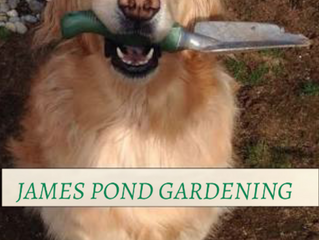 8 great Gardening tips for Autumn