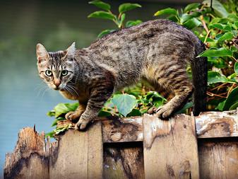 Leucemia e inmunodeficiencia felinas