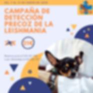 Campaña_leish_enero20.png