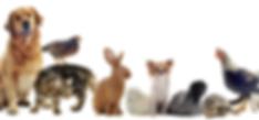 Clinica Veterinaria en Chamberí. Atenión de perros, gatos y mascotas exóticas.