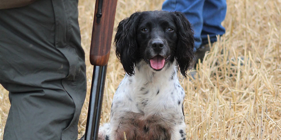 PEG DOG SIMULATED DRIVEN TRAINING DAY WITH CLAYS