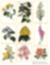 Lovely Botanicals.jpg