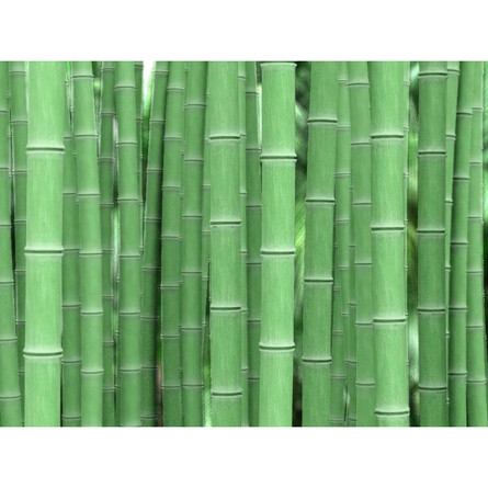 bamboo-01.jpg