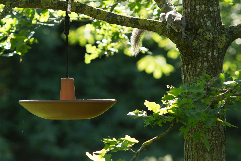 Tom Higgs Design - Koi  Birdbath : Feede