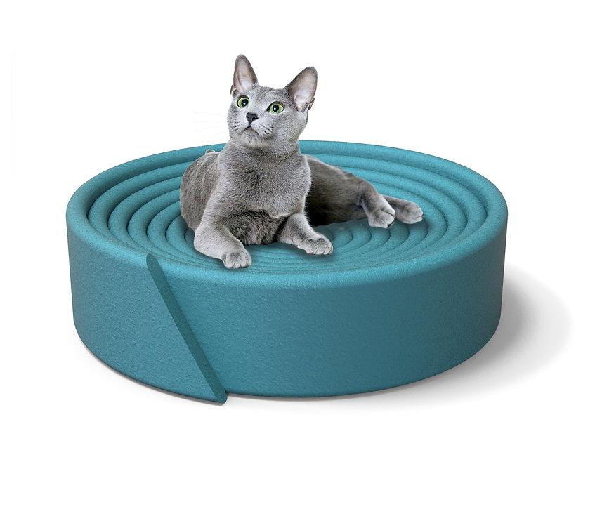 MOMO-CAT-BED-TOM-HIGGS-single.jpg