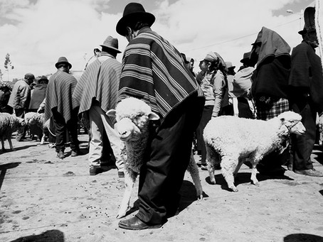 Clo's Next ViewPoint: The animal market of Guamote, Ecuador.