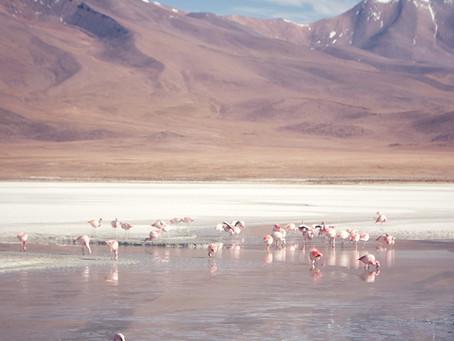 Clo's Next ViewPoint: The Laguna Route, Bolivia.