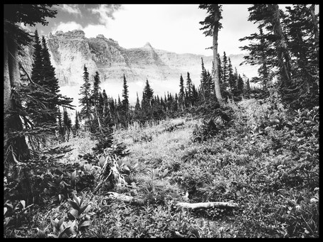 Clo's Next ViewPoint: black and white forest beauties, British Columbia, Canada and Montana, USA