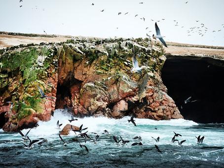 Clo's Next ViewPoint: Islas Balestas, Peru.