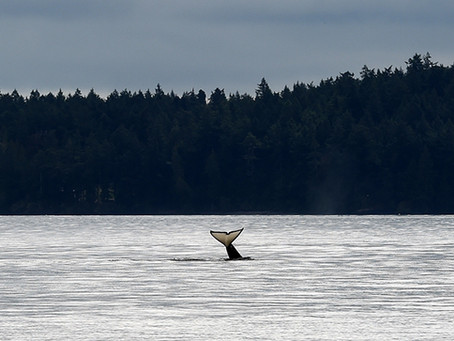 Good Whale Hunting