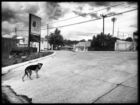 Clo's Next ViewPoint: Dogs along the road