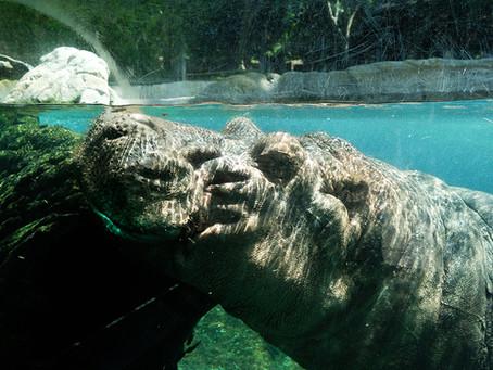 Clo's Next ViewPoint: San Diego Zoo, USA.