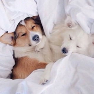 adorable-animal-animals-bed-Favim.com-36
