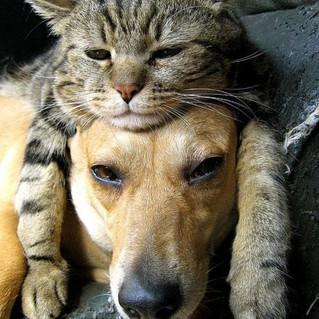 animals-cachorro-cat-cats-Favim.com-3363