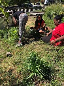 Weeding the Peace Garden.jpeg