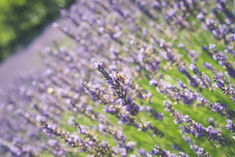 Lavender Ridge Wedding Venue Reno