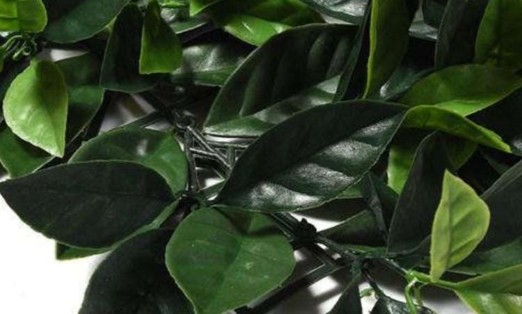 Enredadera Artificial Liptus