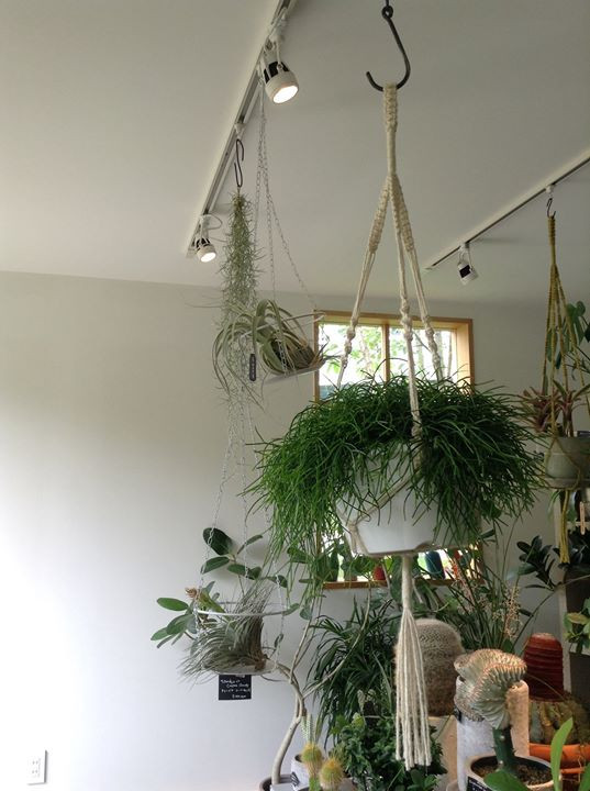 多肉葉植物、由宇、イロハーブ、Green shop Midori