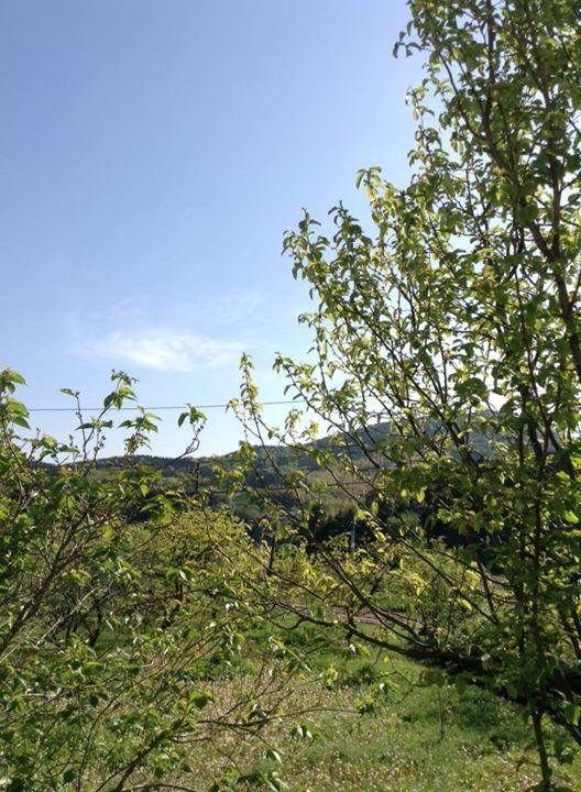 新緑、晴れ、天気、青空、快晴