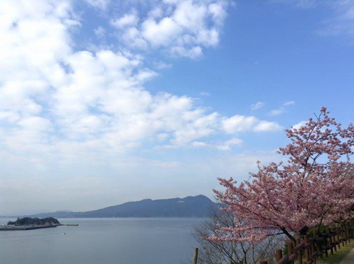 海と桜と水仙、上関町