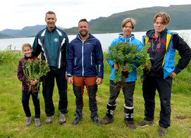 Growing more Golden Root in Artic